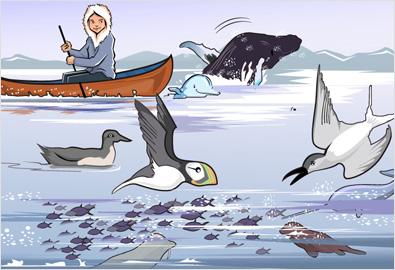 nature book illustrations
